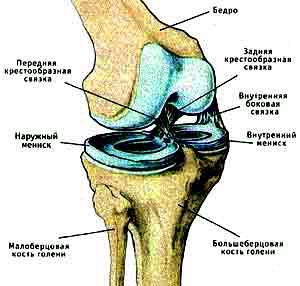 Медицина коленного сустава скованность всех суставов-причина