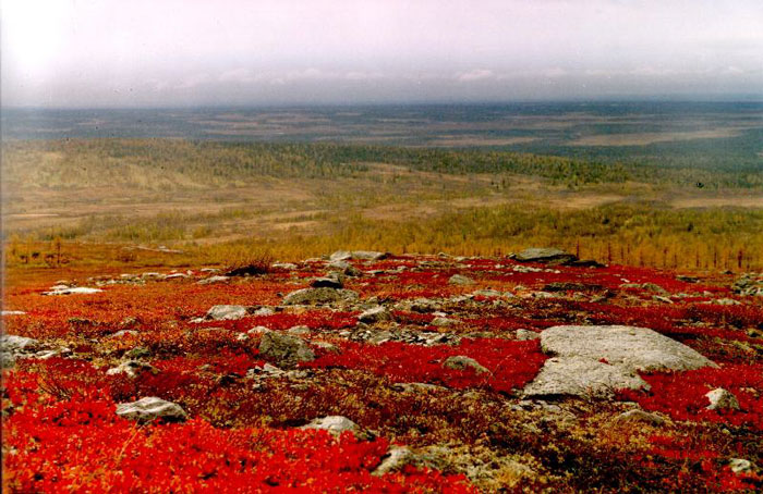 http://www.mountain.ru/photo/2000/kraski_tundr/Kraski-Tundry_hr1.jpg