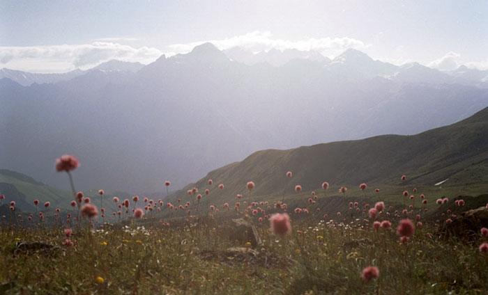 http://www.mountain.ru/world_mounts/caucasia/prielbrus/2002/Ushba_svan/img/Cvety.jpg